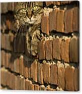 Cat On A Brick Wall Canvas Print