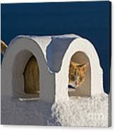 Cat On A Roof, Greece Canvas Print