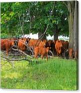 Cattle Herd Canvas Print