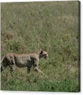 Cheetah On The Serengeti Canvas Print