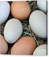 Chicken Eggs Canvas Print