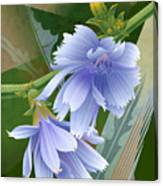 Chicory Cornflower Print Canvas Print