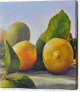 Citrons Canvas Print