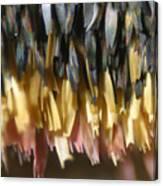 Close-up Of Luna Moth Wing Canvas Print