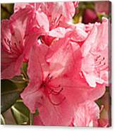 Close-up Of Pink Flowers In Bloom Canvas Print