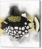 Clown Triggerfish No 01 Canvas Print