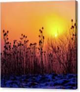 Cold Silence Canvas Print