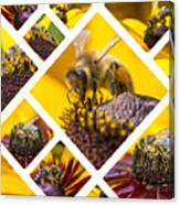 Collage Of Western Honey Bee Canvas Print