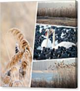 Collage Of Winter Grass Canvas Print
