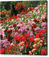 Colorful Spring Rose Garden Canvas Print