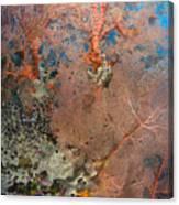 Colourful Sea Fan With Crinoid, Papua Canvas Print