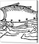 Constellation: Pisces Canvas Print