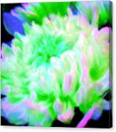 Cool Colorful Chrysanthemum Canvas Print