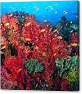 Coral Reef Scene Canvas Print