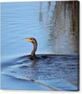 Cormorant In The Marsh Canvas Print