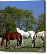 Country Horses Canvas Print