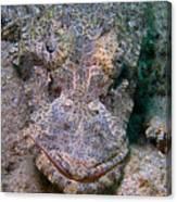 Crocodile Fish Canvas Print