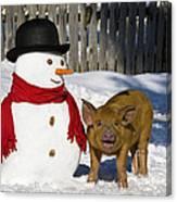 Curious Piglet And Snowman Canvas Print