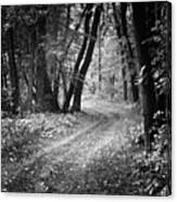 Curving Trail Entering Deciduous Forest Canvas Print