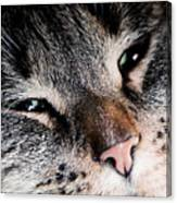Cute Cat Close-up Portrait Canvas Print