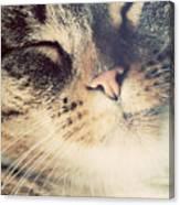 Cute Small Cat Portrait Canvas Print