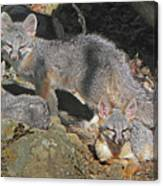 D-a0072 Fox Family On Our Mountain Canvas Print