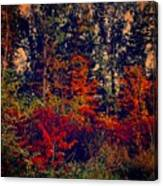 Day In The Woods  Canvas Print