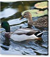 Day On The Pond Canvas Print