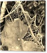 Decayed Lacing Canvas Print