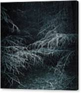Deep In Woods Canvas Print