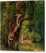 Deer In The Forest, 1868 Canvas Print