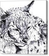 Deer Tiger Canvas Print