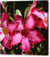 Desert Rose   Adenium Obesum Canvas Print