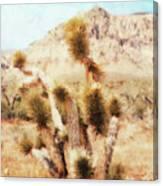 Desert Yucca Canvas Print