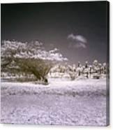 Desertic Landscape Canvas Print