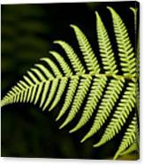 Detail Of Asian Rain Forest Ferns Canvas Print