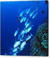 Diving Australia Canvas Print