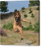 Dog Leaping Canvas Print
