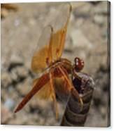 Dragonfly 18 Canvas Print