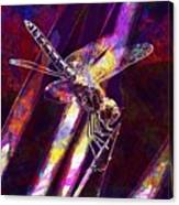 Dragonfly Insect Close  Canvas Print