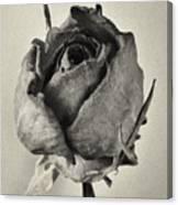 Dried Rose Canvas Print