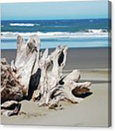 Driftwood On Beach Canvas Print