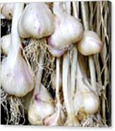 Drying Garlic Canvas Print