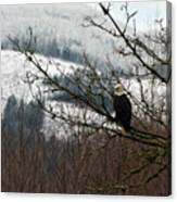 Eagle Watching Canvas Print