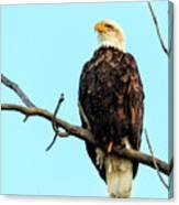 Eagle's View Canvas Print