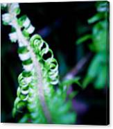 Early Fern Canvas Print