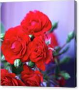 Early Morning Roses Canvas Print