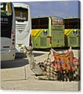 Egyptian Parking Lot Canvas Print
