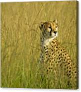 Elegant Cheetah Canvas Print