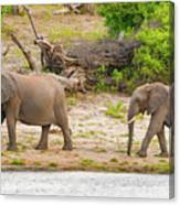 Elephants At The Bank Of Chobe River In Botswana Canvas Print